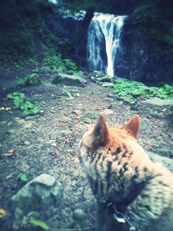 滝ばんび04.png